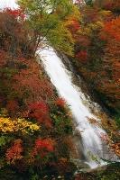 しゃくなげの滝2s-.jpg